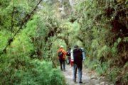 People walking through Peruvian Rainforest