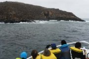 Lima Mentor Tour of Callao and Palomino Islands