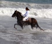 Peruvian Horse Running in Water