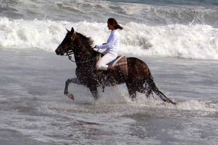 Peruvian Horse Running in Water