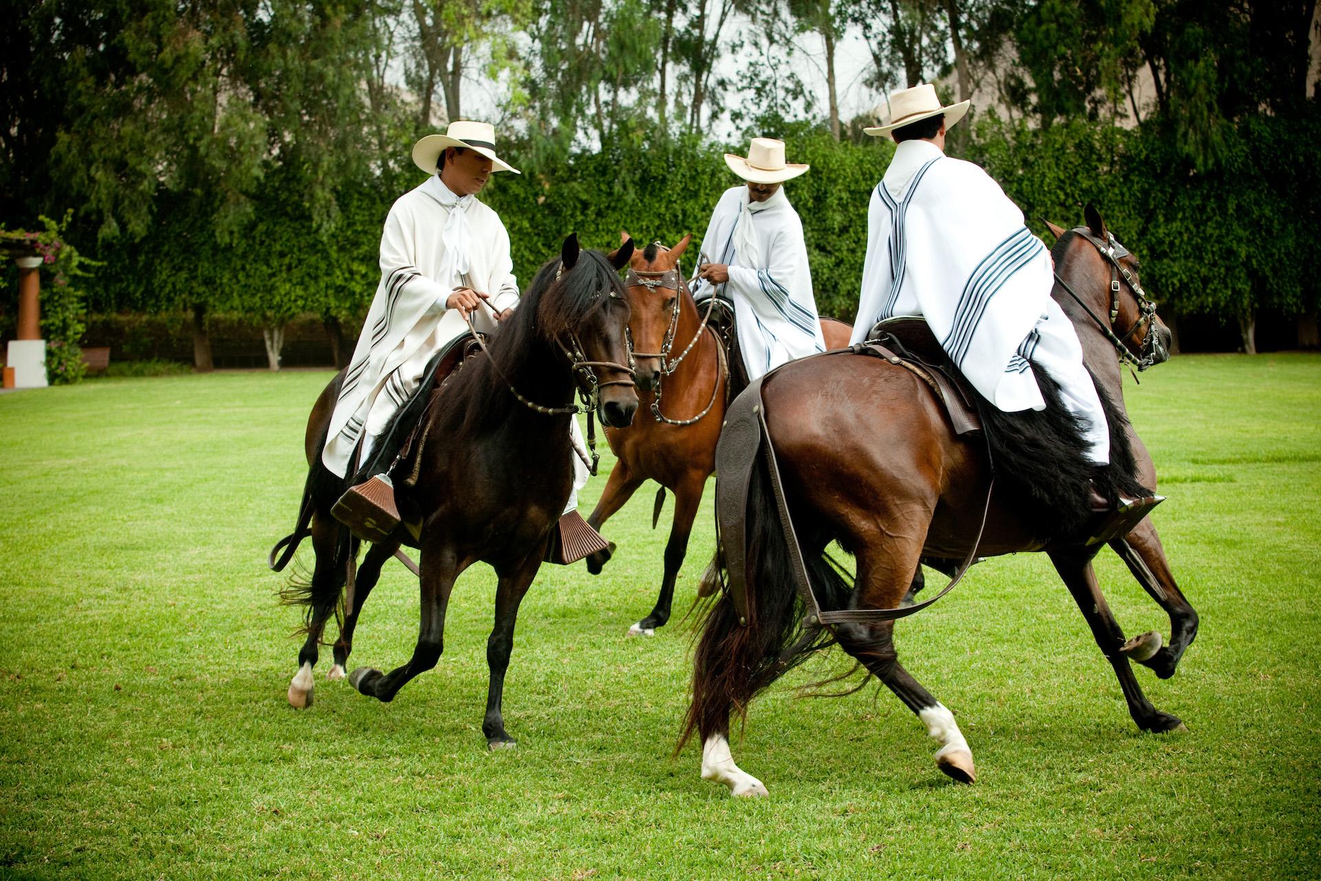 Peruvian Paso Horse Show Demo