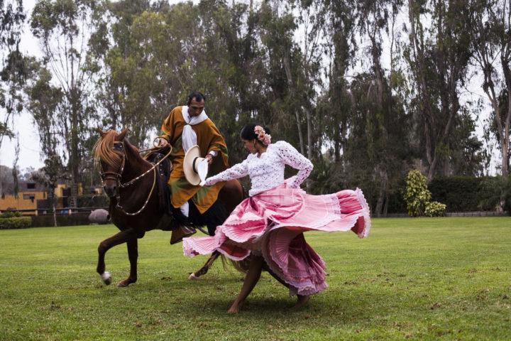 Peruvian Paso Horse Demo